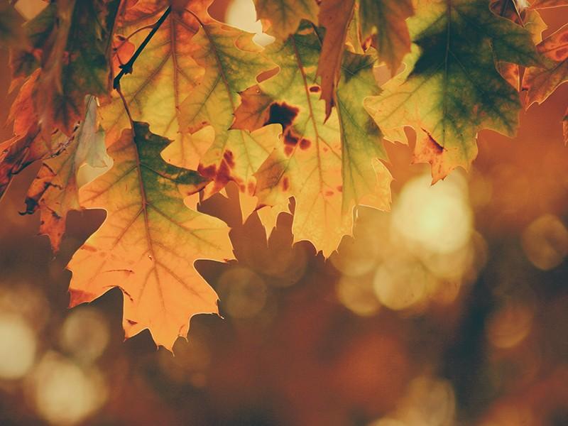 Dan zahvalnosti lišće